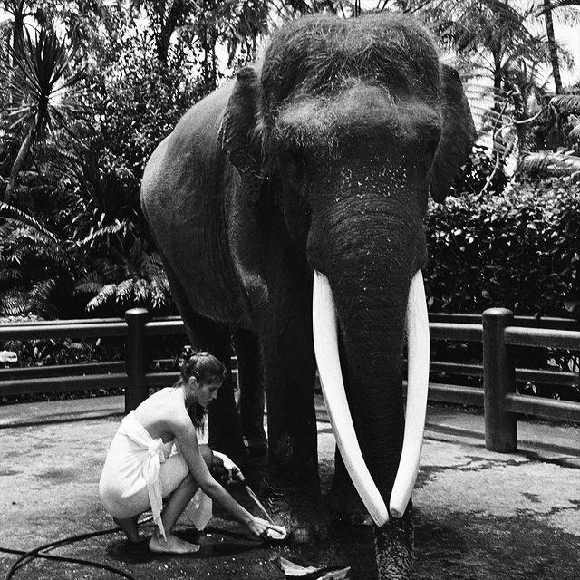 【波多野结衣】美女全裸骑大象惹议?名模《Alesya Kafelnikova》表示爱自然是天性!
